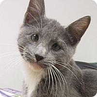 Adopt A Pet :: Sheldon - Lafayette, CA