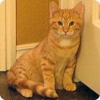 Adopt A Pet :: Snickerdoodle - Bentonville, AR