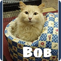 Adopt A Pet :: Bob - Fairbury, NE