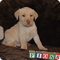 Adopt A Pet :: Fiona - Ogden, UT