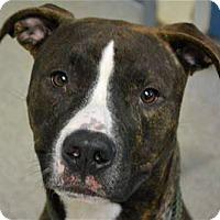 Adopt A Pet :: O'Malley - Troy, MI