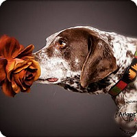 Adopt A Pet :: Norman - Aurora, CO