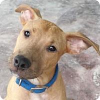 Adopt A Pet :: Harley - Sunnyvale, CA