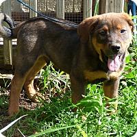 Adopt A Pet :: Bonner - Hartford, CT