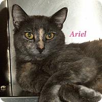 Adopt A Pet :: Ariel - El Cajon, CA