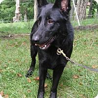 Adopt A Pet :: Nora - Louisville, KY