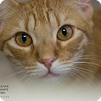 Adopt A Pet :: KORY - Houston, TX