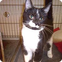 Adopt A Pet :: Huck - Muscatine, IA