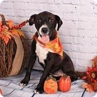 Adopt A Pet :: Suellen - PENDING - East Dover, VT