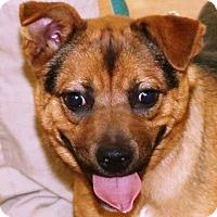 Adopt A Pet :: Zamboni - McDonough, GA