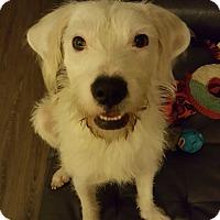 Adopt A Pet :: Jack - Florence, KY