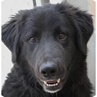Adopt A Pet :: TATTERS - Red Bluff, CA