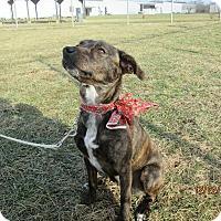 Adopt A Pet :: BRENDA - LaGrange, KY