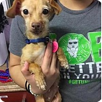 Adopt A Pet :: Pinky - Mission, KS