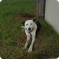 Adopt A Pet :: Valentina - Eustace, TX