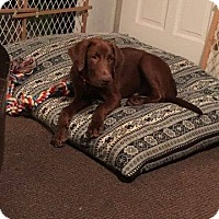 Adopt A Pet :: Waylon - bullard, TX