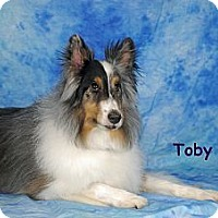 Adopt A Pet :: Toby - Ft. Myers, FL