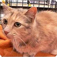 Adopt A Pet :: Spat - Putnam Valley, NY