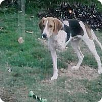 Adopt A Pet :: Gino Wilder - Southampton, PA