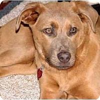 Adopt A Pet :: J.J.-ADOPTED! - kennebunkport, ME
