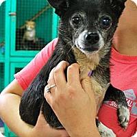 Adopt A Pet :: Louie - Homewood, AL