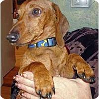 Adopt A Pet :: RUSTY - Portland, OR