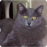 Adopt A Pet :: Charles - Davis, CA