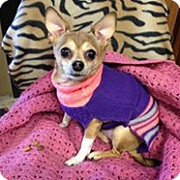 Adopt A Pet :: Chica ~ Adoption Pending - Youngstown, OH