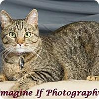 Adopt A Pet :: Emma - Edmond, OK
