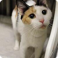 Adopt A Pet :: Precious - Merrifield, VA
