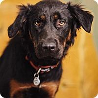 Adopt A Pet :: Madrid - Portland, OR