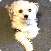 Adopt A Pet :: TOFFEE-pending - Eden Prairie, MN