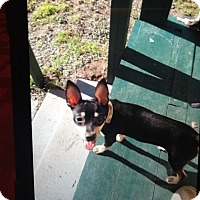 Adopt A Pet :: Alex - springtown, TX