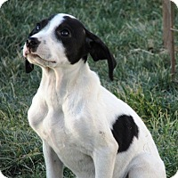 Adopt A Pet :: Gabby - Germantown, MD