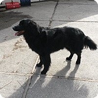 Adopt A Pet :: Alex - Chewelah, WA
