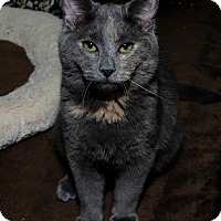 Adopt A Pet :: Eclipse - Mississauga, Ontario, ON