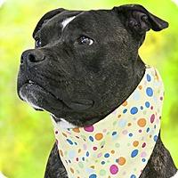 Adopt A Pet :: Montana - Cincinnati, OH