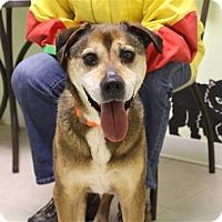 Adopt A Pet :: Maddie - Elyria, OH