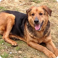 Adopt A Pet :: HERKY - Coudersport, PA