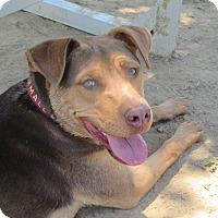 Adopt A Pet :: Ranger - Cullman, AL