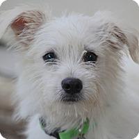 Adopt A Pet :: Bucket - Woonsocket, RI
