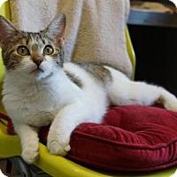 Adopt A Pet :: Flo 'Girly-Girl' - Mt Vernon, NY