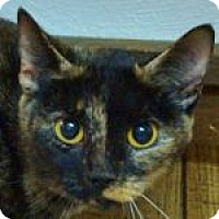 Adopt A Pet :: Cee Cee - Medford, MA