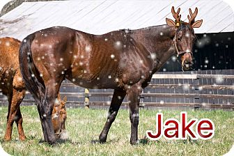 Thoroughbred Mix for adoption in Nicholasville, Kentucky - Holiday Special-Jake for $50