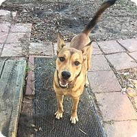 Adopt A Pet :: Sally - Bend, OR
