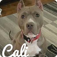 Adopt A Pet :: Cali - Des Moines, IA