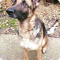 Adopt A Pet :: Stella - Portland, ME