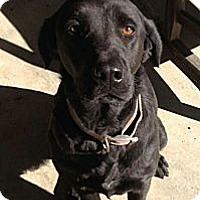 Adopt A Pet :: Shilo - Costa Mesa, CA