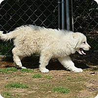 Adopt A Pet :: Patti - New Boston, NH