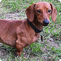 Adopt A Pet :: *Waylon - PENDING - Westport, CT